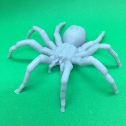 Download free 3D printing designs Spider, Pza4Rza