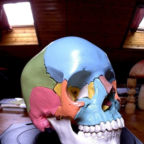 Impresiones 3D gratis Cráneo Anatómico, Cornbald