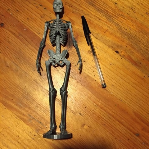 IMG_0595_display_large.jpg Télécharger fichier STL gratuit Squelette humain • Objet imprimable en 3D, Cornbald