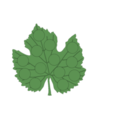 Download free 3D model vine leaf collection, jttassin