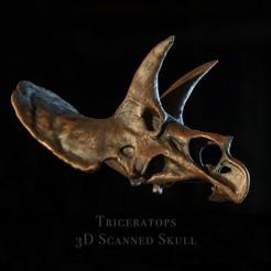 TriceratopsScan3dpict.jpg Télécharger fichier STL Crane de triceratops - Dinosaure • Plan pour imprimante 3D, Tibop