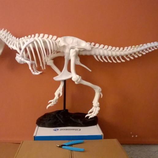 Télécharger fichier 3D gratuit T-Rex Squelette Queue réparée (A+B), topedesigns