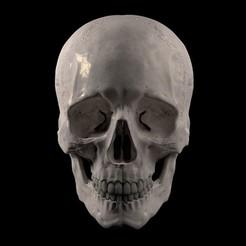 Frontal.jpg Télécharger fichier STL Crâne humain • Objet à imprimer en 3D, thllage