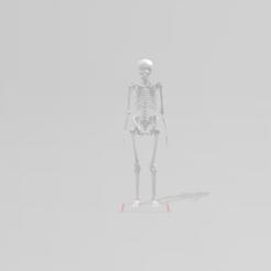 Descargar modelo 3D Esqueleto del cuerpo humano, pauloxc54