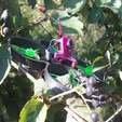 photo_2019-09-11_21-20-58-thing.jpg Télécharger fichier STL gratuit Brushless Shutter Bug • Plan pour impression 3D, noctaro
