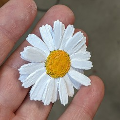 daisy1.jpg Download OBJ file Realistic Daisy for hair or adornment • Template to 3D print, TomWoods
