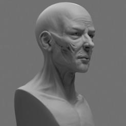 Descargar modelos 3D para imprimir Modelo de impresión en 3D de la cara de la anatomía estilizada, phunguyen