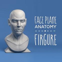 Télécharger plan imprimante 3D Firture de l'anatomie du plan de la face, 3DEasyModel