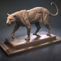 Imprimir en 3D Echarche de leopardo, phunguyen