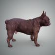 Download free 3D printing designs French Bulldog, Hardesigner