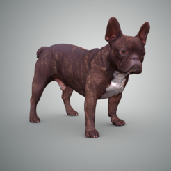Download 3D printing designs French Bulldog, Hardesigner
