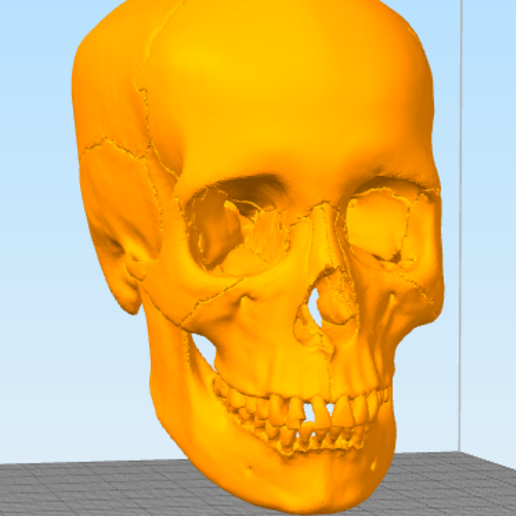 skull1.PNG Télécharger fichier STL gratuit Crâne • Objet pour imprimante 3D, Hardesigner