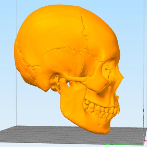 skull2.PNG Télécharger fichier STL gratuit Crâne • Objet pour imprimante 3D, Hardesigner