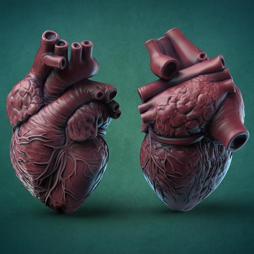 Télécharger fichier STL Coeur humain, GrinNT