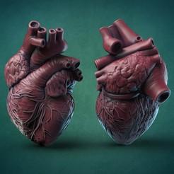 6356.jpg Télécharger fichier OBJ Coeur humain • Modèle pour impression 3D, GrinNT