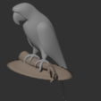 Parrot6.png Download free STL file Parrot • 3D printing template, osayomipeters