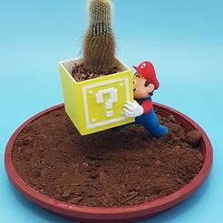 Download STL file Mario Garden Helper Flower Pot, LittleFriend