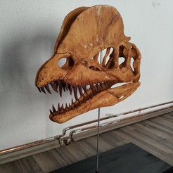 Download STL files Dilophosaurus Skull, arric