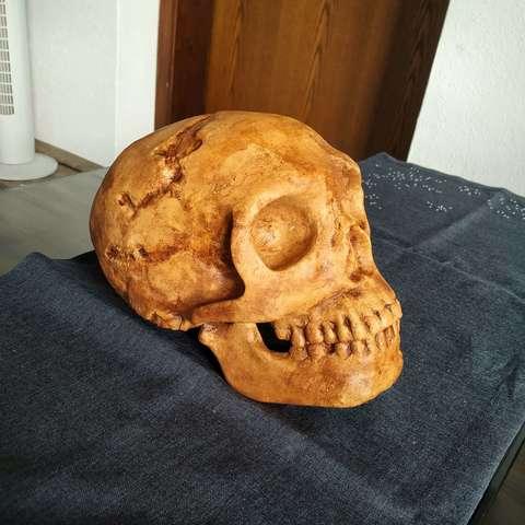 STL files Neanderthaler Skull, arric