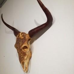 Télécharger plan imprimante 3D Crâne de taureau grandeur nature, arric