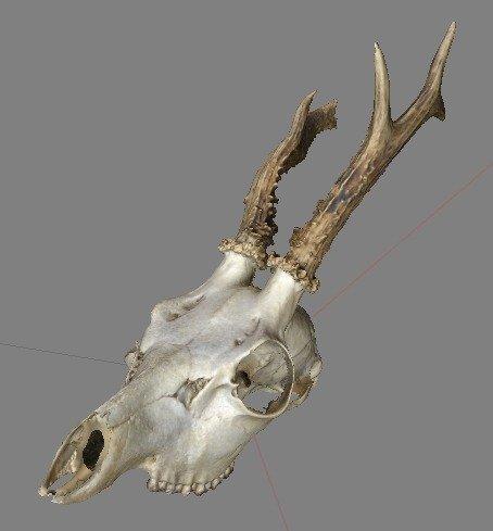 Screen_Shot_2014-07-26_at_9.29.18_pm_display_large.jpg Download free STL file Spike the Deer Skull • 3D printing template, AlbertKhan3D