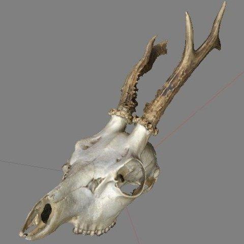 Télécharger modèle 3D gratuit Spike le crâne de cerf, AlbertKhan3D