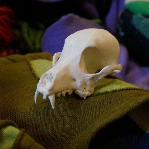 DSC02128_display_large.jpg Download free STL file Bitey the Dog Skull • 3D printer template, AlbertKhan3D