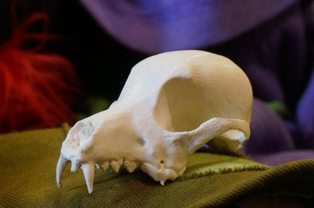 DSC02130_display_large.jpg Download free STL file Bitey the Dog Skull • 3D printer template, AlbertKhan3D