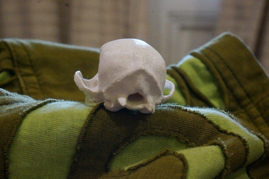 DSC02133-2_display_large.jpg Download free STL file Bitey the Dog Skull • 3D printer template, AlbertKhan3D