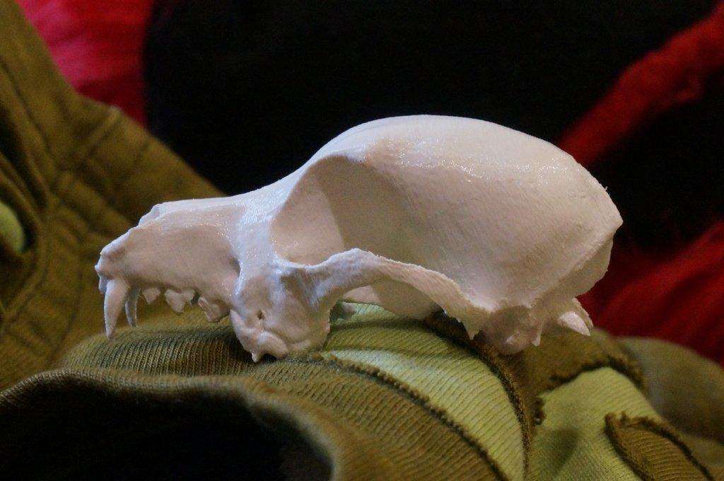 DSC02131_1_display_large.jpg Download free STL file Bitey the Dog Skull • 3D printer template, AlbertKhan3D