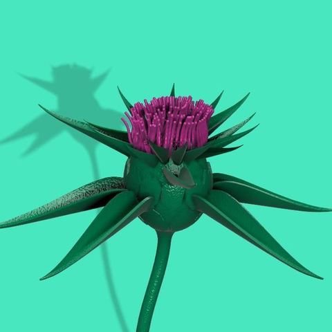 Download free STL file Milk thistle flower, EliGreen
