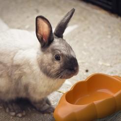 PetBowlCarrot01.jpg Télécharger fichier 3MF Carotte de bol pour animaux • Modèle pour imprimante 3D, hopio