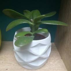 Download STL Flower pot cover, leocncrs