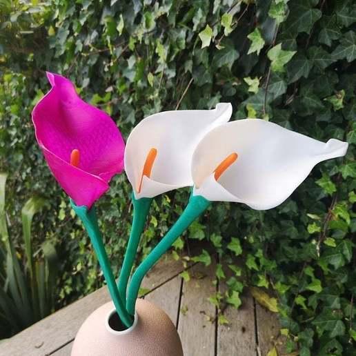 Télécharger objet 3D gratuit Lys Calla, Oggie