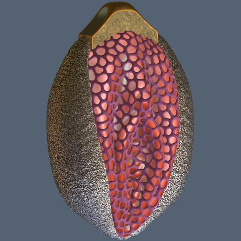 3D printer files Vagina Voronoi Nut Prison, Hic-Habitat-3D-Felicitas