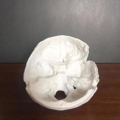 Télécharger fichier impression 3D Crâne humain, roger11