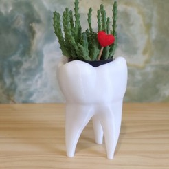 IMG_20200804_182211.jpg Download STL file Tooth vase  • 3D printer model, happens
