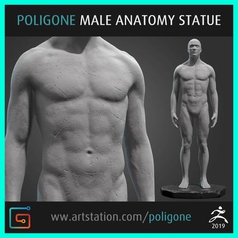 Download 3D model Male Anatomy Statue, jinsk8r