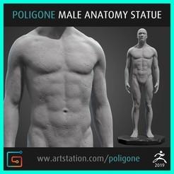 Imprimir en 3D Estatua de Anatomía Masculina, jinsk8r
