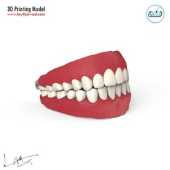 01.jpg Download STL file Teeth - Jaws with Tongue • Template to 3D print, LaythJawad