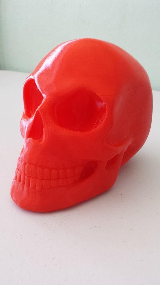 skull_display_large.jpg Télécharger fichier STL gratuit Crâne • Objet pour imprimante 3D, Dourgurd