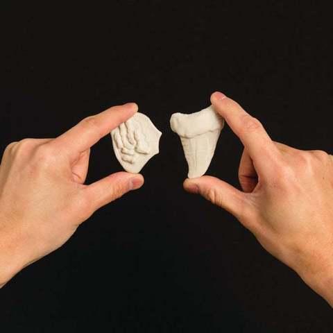 Download free OBJ file Project: Making Fossils with Sculptris • Model to 3D print, Urulysman