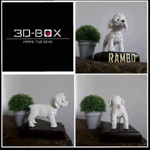 rambo2.jpeg Download STL file I AM 3D-BOX : TEDDY, RAMBO,VIGO • Template to 3D print, johnnyandresparrales