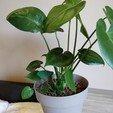 Télécharger fichier impression 3D gratuit stylo plante, ryangille