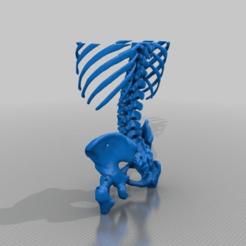 24b8561c46753096871ead0b4324bf7a.png Télécharger fichier STL gratuit Scanner réel du thorax et du bassin (homme) • Modèle pour imprimante 3D, cntrcn89