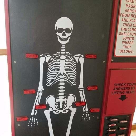 SkeletonExhibit.jpg Download free STL file Body Part Arrow Magnets • 3D printable model, EmbossIndustries
