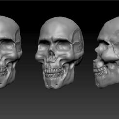 0.png Download STL file Skull Anatomy • Model to 3D print, Khatri3D