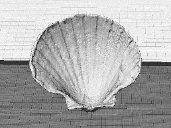 front_display_large.jpg Download free STL file Sea Shell - Digitizer MultiScan • Design to 3D print, Muzz64