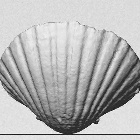 rear_display_large.jpg Download free STL file Sea Shell - Digitizer MultiScan • Design to 3D print, Muzz64