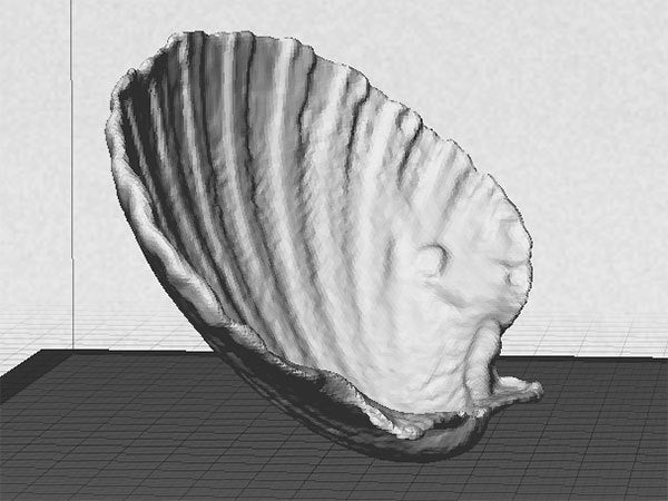 side_display_large.jpg Download free STL file Sea Shell - Digitizer MultiScan • Design to 3D print, Muzz64